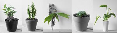 観葉植物や多肉植物の育て方をご紹介したウチデグリーン ノート